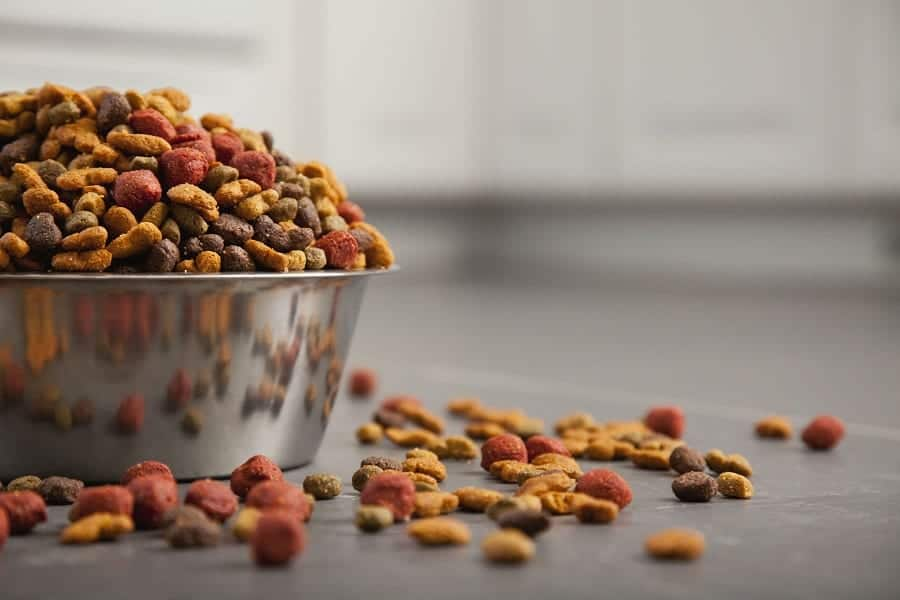 Dog Food Types: Feed Your Dog The Right Kind Of Food