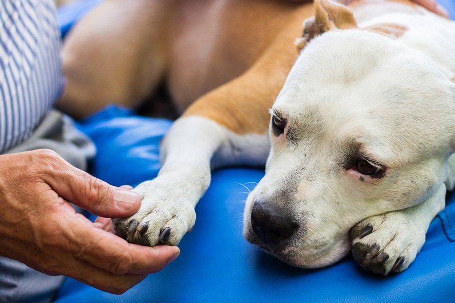 Can Home Remedies Help With Dog Joint Pain?