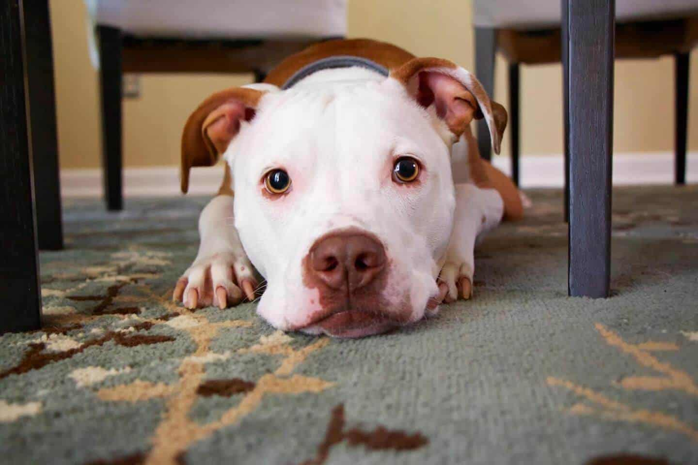How To Tell If Your Dog Is Overheating
